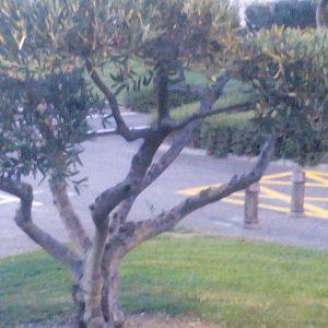 Oliwki w parku